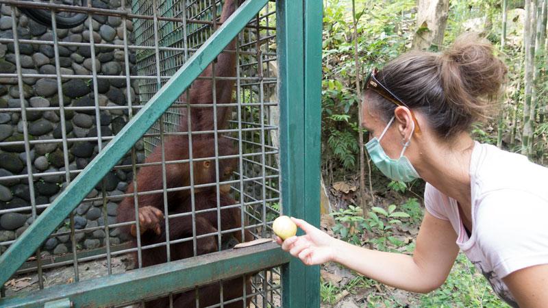 vrijwilligerswerk buitenland met apen en andere dieren