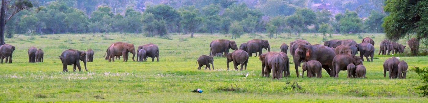 Vrijwilligerswerk buitenland met olifanten en andere dieren