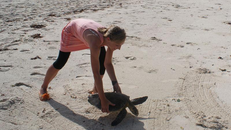 vrijwilligerswerk buitenland met zeeschildpadden en andere dieren