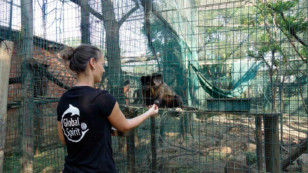 Global Spirit vrijwilligersreizen in het buitenland met dieren