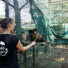Global Spirit volunteer abroad with animals